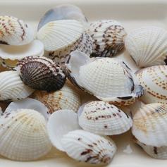Beach Tema Guscio Matrimonio Décor unico (50 pezzi) (131036843)