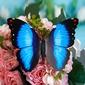 Blau Kunststoff Schmetterling (131037680)