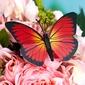 Rot und Schwarz Kunststoff Schmetterling (Satz von 6) (131037672)