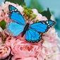 Hübsche Kunststoff Schmetterling/Dekorative Accessoires (Satz von 6) (131037659)